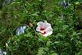 Flower 128 (13968791862).jpg