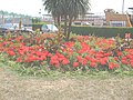 Flower bed - geograph.org.uk - 903775.jpg
