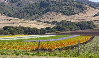 Los Osos Valley valley in San Luis Obispo County, United States of America