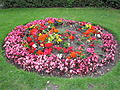 Flowerbed, Victoria Park, Stretford.JPG