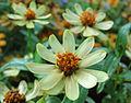 Flowers (160).jpg