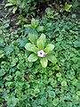 Flowers of Baghdad 32.jpg