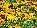 Flowers of Iran by qom city 06.jpg