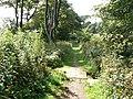 Footbridge on the Coastal Path - geograph.org.uk - 1464108.jpg