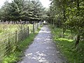 Footpath, Grane - geograph.org.uk - 1417017.jpg