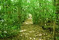 Footpath across Ightham Common - geograph.org.uk - 857430.jpg