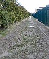 Footpath behind Alder School - geograph.org.uk - 1141373.jpg