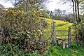 Footpath beside Capel Horeb - Mynyddygarreg - geograph.org.uk - 1259383.jpg