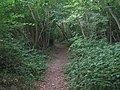 Footpath through Slowery Wood - geograph.org.uk - 1437856.jpg