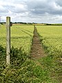 Footpath through the Field - geograph.org.uk - 876811.jpg