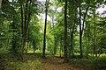 Forêt de Mormal 08.jpg