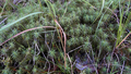 Forest & Moss 10.png