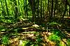 Forest (42234477381).jpg