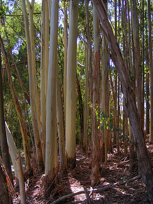 Part of the constructed forest at Warrawong sa...