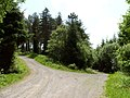 Forest Road - geograph.org.uk - 1361026.jpg