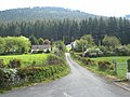 Forest above Rostrevor - geograph.org.uk - 441815.jpg