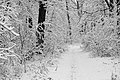 Forest road Slavne 2017 BW G7.jpg