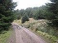 Forest road below Hope Edge - geograph.org.uk - 365542.jpg