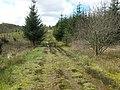 Forest track below Bennan Hill - geograph.org.uk - 1362462.jpg
