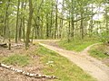 Forst Grunewald - Waldwegen - geo.hlipp.de - 28475.jpg