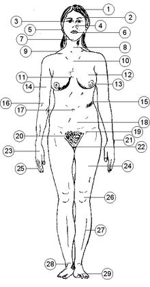 вид женских половых губ фото