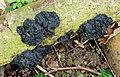 Fungi ? (33681705312).jpg