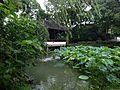 Furongxie and lotus of Zhuozhengyuan Garden.JPG