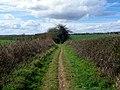 GOC Watton-at-Stone 024 Bridleway (27464260171).jpg