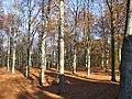Galgberget-skog hstd.JPG