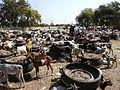 Gambia01SouthGambia064 (5380660742).jpg