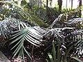 Gardenology-IMG 5069 hunt10mar.jpg