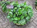 Gardenology.org-IMG 7747 qsbg11mar.jpg