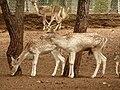 Gaziantep Zoo 1260138.jpg