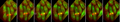Gene Function in the Fission Yeast Schizosaccharomyces pombe.png