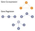 Gene co-expression vs regulation.png
