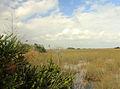 Gfp-florida-everglades-national-park-glades-view.jpg
