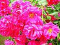 Giardino di Ninfa 41.jpg