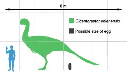 Gigantoraptor size