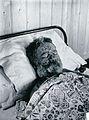 Gloucester smallpox epidemic, 1896; George Steel Wellcome V0031446.jpg