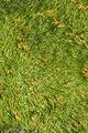 Goa 2012 IMG 5591 (7849274332).jpg