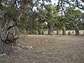 Goni - Parco archeologico Pranu Mattedu - panoramio - gian luca bucci (3).jpg