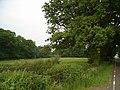 Gooseholm Copse - geograph.org.uk - 464441.jpg