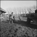 Granada Relocation Center, Amache, Colorado. Ag students cleaning the dairy farm feeding yard. - NARA - 539136.tif