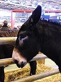 L'âne noir du Berry dans ANE