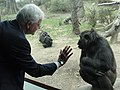 Great Apes Exhibit (5620060456).jpg