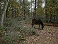 Gritnam Wood, pony - geograph.org.uk - 1570954.jpg