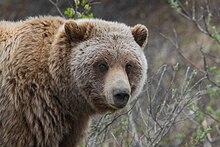 speed dating czarny niedźwiedź białe równiny
