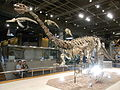 HK TST Science Museum Bones exhibit 01 恐龍 dinosaur.JPG