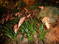 Haifa International Flower Exhibition P1130969.JPG