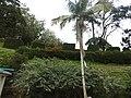 Hakgala botanical garden-7-nuwara eliya-Sri Lanka.jpg